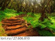 Купить «Forest stairs in a Garajonay national park», фото № 27606810, снято 23 марта 2019 г. (c) easy Fotostock / Фотобанк Лори