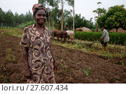Купить «Symphoroza Bujune bought oxen with a 500,000 UGS group loan from Kolping Uganda Society.», фото № 27607434, снято 21 января 2019 г. (c) age Fotostock / Фотобанк Лори