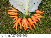 Купить «Морковь бракованная и капустный лист», эксклюзивное фото № 27609466, снято 19 сентября 2017 г. (c) Анатолий Матвейчук / Фотобанк Лори