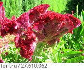 Купить «Red flower in garden Alhambra», фото № 27610062, снято 24 октября 2018 г. (c) PantherMedia / Фотобанк Лори