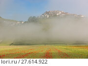 Купить «Castelluccio with poppy fields in morning Fog, Umbria, Italy», фото № 27614922, снято 20 мая 2019 г. (c) PantherMedia / Фотобанк Лори