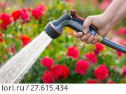 Купить «Watering garden with flowers using hose», фото № 27615434, снято 23 июля 2019 г. (c) PantherMedia / Фотобанк Лори