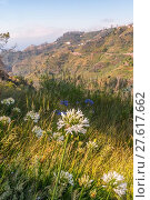Купить «levada walking trail past mountain villages with terraces fields in the east madeira - levada dos tornos camacha with typical flowers agapanthus - aeonium.», фото № 27617662, снято 18 августа 2019 г. (c) PantherMedia / Фотобанк Лори