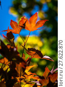 Купить «nature natural season autumn gorgeous», фото № 27622870, снято 22 февраля 2019 г. (c) PantherMedia / Фотобанк Лори