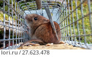 Купить «grid mouse trap grate grille», фото № 27623478, снято 26 марта 2019 г. (c) PantherMedia / Фотобанк Лори