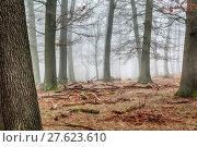 Купить «tree haze snag resin beech», фото № 27623610, снято 22 мая 2019 г. (c) PantherMedia / Фотобанк Лори