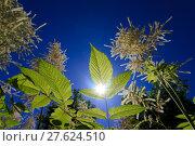 Купить «counter light blauer himmel grüne», фото № 27624510, снято 19 октября 2019 г. (c) PantherMedia / Фотобанк Лори