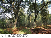 Купить «green path way calibrate eichenwald», фото № 27630270, снято 25 марта 2019 г. (c) PantherMedia / Фотобанк Лори