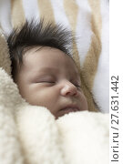 Купить «Newborn Baby Girl», фото № 27631442, снято 27 марта 2019 г. (c) PantherMedia / Фотобанк Лори