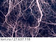 Купить «pink branches,dark blue sky,looks like flashes or veins,abstract», фото № 27637118, снято 17 марта 2018 г. (c) PantherMedia / Фотобанк Лори