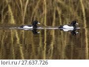 Купить «nature water day outside wildlife», фото № 27637726, снято 19 октября 2018 г. (c) PantherMedia / Фотобанк Лори
