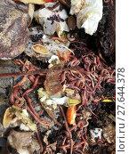 Купить «living in the compost heap», фото № 27644378, снято 27 марта 2019 г. (c) PantherMedia / Фотобанк Лори