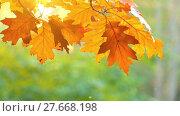 Купить «Reddened leaves of oak in autumn city park», видеоролик № 27668198, снято 26 ноября 2017 г. (c) BestPhotoStudio / Фотобанк Лори