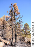 Купить «Effects of the Fire in a Forest», фото № 27670818, снято 27 марта 2019 г. (c) PantherMedia / Фотобанк Лори