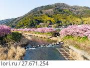 Купить «Sakura flower and river», фото № 27671254, снято 23 апреля 2018 г. (c) PantherMedia / Фотобанк Лори