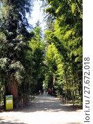 Купить «An alley of the park bamboo Anduze», фото № 27672018, снято 25 июня 2018 г. (c) PantherMedia / Фотобанк Лори