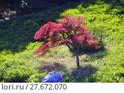 Купить «Japanese Garden Park Anduze bamboo», фото № 27672070, снято 19 октября 2018 г. (c) PantherMedia / Фотобанк Лори