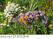Купить «Садовые цветы на клумбе», эксклюзивное фото № 27673814, снято 24 июля 2017 г. (c) Елена Коромыслова / Фотобанк Лори