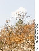 Купить «Forest after fire on a mountain», фото № 27677002, снято 27 марта 2019 г. (c) PantherMedia / Фотобанк Лори