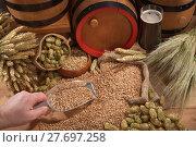 Купить «grain wheat cereal beer hop», фото № 27697258, снято 27 мая 2020 г. (c) PantherMedia / Фотобанк Лори