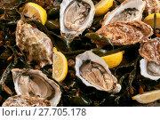 Купить «Fresh raw opened oysters on a bed of kelp», фото № 27705178, снято 19 февраля 2018 г. (c) PantherMedia / Фотобанк Лори