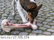 Купить «animal skin dog engulf devour», фото № 27705374, снято 17 июля 2019 г. (c) PantherMedia / Фотобанк Лори