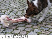 Купить «animal skin dog engulf devour», фото № 27705378, снято 17 июля 2019 г. (c) PantherMedia / Фотобанк Лори