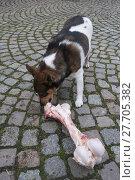 Купить «animal skin dog engulf devour», фото № 27705382, снято 17 июля 2019 г. (c) PantherMedia / Фотобанк Лори