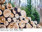 Купить «forest harvest trunk rationing tribes», фото № 27705754, снято 21 октября 2019 г. (c) PantherMedia / Фотобанк Лори