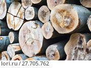 Купить «forest harvest trunk rationing tribes», фото № 27705762, снято 21 октября 2019 г. (c) PantherMedia / Фотобанк Лори