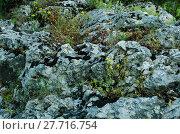Купить «mossy rock texture three», фото № 27716754, снято 18 января 2019 г. (c) PantherMedia / Фотобанк Лори