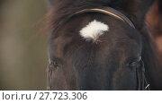 Купить «The face and eyes of the black horse closeup, spot on his forehead», видеоролик № 27723306, снято 25 апреля 2018 г. (c) Константин Шишкин / Фотобанк Лори