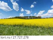 Купить «nature spring field agriculture scenery», фото № 27727278, снято 20 июня 2019 г. (c) PantherMedia / Фотобанк Лори