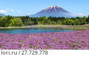 Купить «Fuji with the field of pink moss at Shibazakura festival, Yamanashi, Japan», фото № 27729778, снято 17 июля 2019 г. (c) PantherMedia / Фотобанк Лори