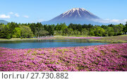 Купить «Fuji with the field of pink moss at Shibazakura festival, Yamanashi, Japan», фото № 27730882, снято 17 июля 2019 г. (c) PantherMedia / Фотобанк Лори