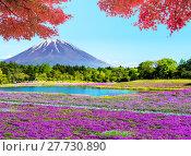 Купить «Fuji with the field of pink moss at Shibazakura festival, Yamanashi, Japan», фото № 27730890, снято 17 июля 2019 г. (c) PantherMedia / Фотобанк Лори