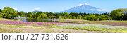 Купить «Fuji with the field of pink moss at Shibazakura festival, Yamanashi, Japan», фото № 27731626, снято 17 июля 2019 г. (c) PantherMedia / Фотобанк Лори