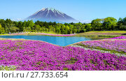 Купить «Fuji with the field of pink moss at Shibazakura festival, Yamanashi, Japan», фото № 27733654, снято 2 июля 2020 г. (c) PantherMedia / Фотобанк Лори