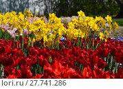 Купить «plant flower park spring flowers», фото № 27741286, снято 18 октября 2018 г. (c) PantherMedia / Фотобанк Лори