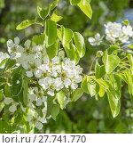 Купить «background beautiful nature beauty green», фото № 27741770, снято 27 февраля 2020 г. (c) PantherMedia / Фотобанк Лори