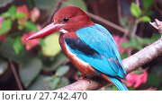 Купить «A closeup view of the species of kingfisher found in the Indian tropics.», фото № 27742470, снято 21 февраля 2019 г. (c) PantherMedia / Фотобанк Лори