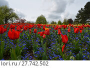 Купить «tulips splendor», фото № 27742502, снято 18 января 2019 г. (c) PantherMedia / Фотобанк Лори