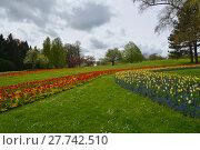 Купить «tulips splendor», фото № 27742510, снято 18 января 2019 г. (c) PantherMedia / Фотобанк Лори