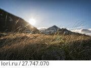 Купить «Grassy landscape in Iceland», фото № 27747070, снято 24 февраля 2018 г. (c) PantherMedia / Фотобанк Лори