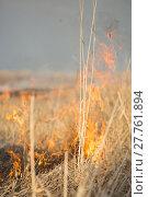 Купить «burns dry grass fire», фото № 27761894, снято 27 марта 2019 г. (c) PantherMedia / Фотобанк Лори