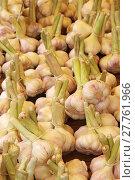 Купить «garlic allium sativum gemüsemarkt gemüsestand», фото № 27761966, снято 24 июня 2019 г. (c) PantherMedia / Фотобанк Лори