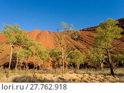 Купить «Uluru Kata Tjuta National Park (Ayers Rock)», фото № 27762918, снято 25 мая 2019 г. (c) age Fotostock / Фотобанк Лори