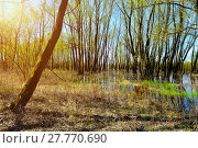 Купить «Forest spring landscape - little forest flooded with overflowing spring water in sunny spring weather», фото № 27770690, снято 5 мая 2016 г. (c) Зезелина Марина / Фотобанк Лори