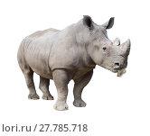 Купить «white rhinoceros, square-lipped rhinoceros isolated», фото № 27785718, снято 27 мая 2019 г. (c) PantherMedia / Фотобанк Лори