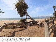 Купить «Tree along the Santa Monica coastline », фото № 27787294, снято 20 июня 2019 г. (c) PantherMedia / Фотобанк Лори